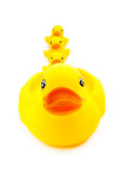 Rubber yellow duck toy on white background Stock Photo