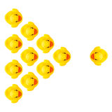 Rubber yellow ducks Stock Photo