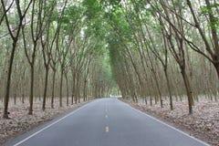rubberboom Stock Fotografie