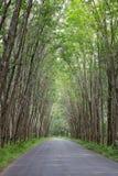 Rubberboom Royalty-vrije Stock Fotografie