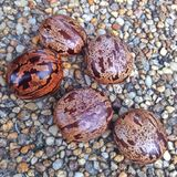 Rubberboomzaden Royalty-vrije Stock Foto's