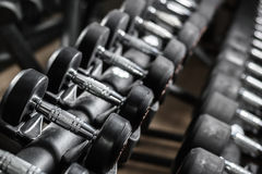 Rubbered Dumbbells on a stand in the gym Stock Photo