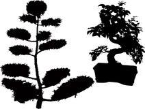 Rubberplantbonsai Stock Foto
