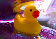 Rubbery duck Stock Photography