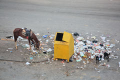 Rubbish-bin and garbage around Royalty Free Stock Photo
