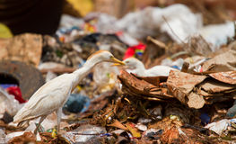Rubbish dump. Human influence on the earth and wildlife, human waste Stock Image