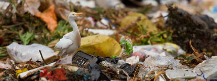 Rubbish dump. Human influence on the earth and wildlife, human waste Royalty Free Stock Image