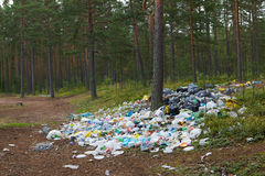 Rubbish in the forest. Stock Images