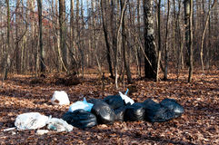 Rubbish in the forest Stock Photography