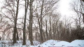 Rubbish in the forest winter stock video footage