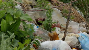 Rubbish Landfill Waste. Urban Refuse Dump Rubbish Landfill Waste stock video footage