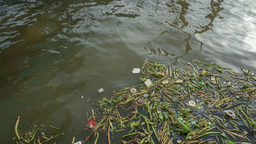 Rubbish and water hyacinth in the pollution Chaopraya river Stock Photo