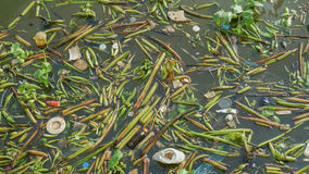Rubbish and water hyacinth in the pollution river Royalty Free Stock Image