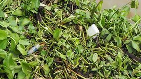 Rubbish and water hyacinth. Trash among water hyacinth on Thai river stock video