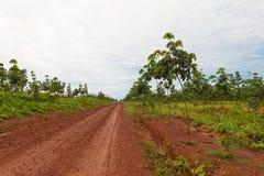 Ruber Plantage Stockfoto