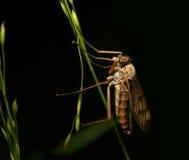 Räuberische Fliege Stockfotos