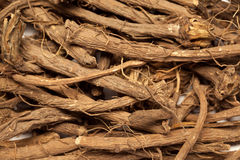 Rubia cordifolia (manjistha) Stock Photos