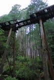 Rubicon森林叉架桥 免版税库存照片