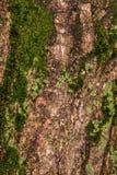 Rubin geknitterte Barke Stockfotografie