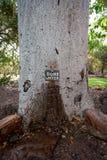 Rubinetto di acqua che esce da un albero del boab nell'Australia occidentale di nord-ovest dell'Australia fotografia stock