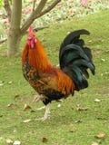 Rubinetto fiero Immagini Stock