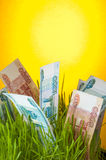 Ruble banknotes in green grass Royalty Free Stock Images