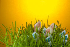 Ruble bills in green grass. Royalty Free Stock Photo
