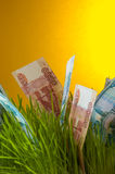 Ruble bills growing in green grass Royalty Free Stock Photo