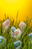 Ruble bills growing in green grass Stock Image
