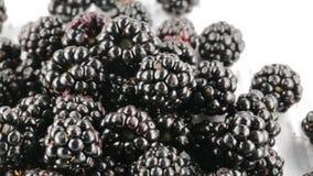 Rubus almacen de metraje de vídeo