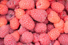 Rubus idaeus maturo dei lamponi rossi Fondo Fotografia Stock