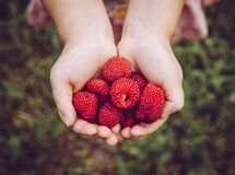 Free Rubus Illecebrosus Also Known As Balloon Berry And Strawberry Raspberry Is Tasty Edible Berry Grown In Home Garden. Stock Image - 176660651