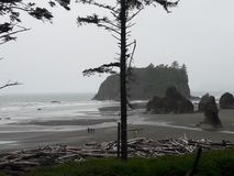 Ruby Beach fotografia de stock royalty free
