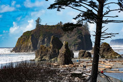 Ruby Beach Arkivbilder