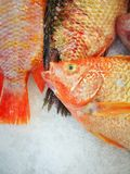 Ruby Fish in Supermarket. Fresh Ruby Fish in Supermarket Royalty Free Stock Photos