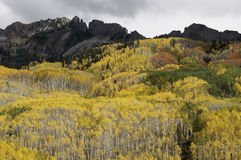 Ruby Mountain above aspen trees by Kebler Pass Royalty Free Stock Photos