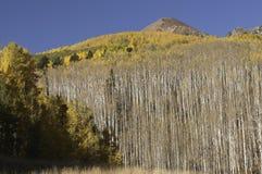 Ruby Peak über Espenbäumen durch Kebler-Durchlauf Stockfotografie
