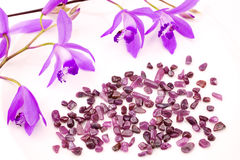 Ruby and purple orchid Stock Image