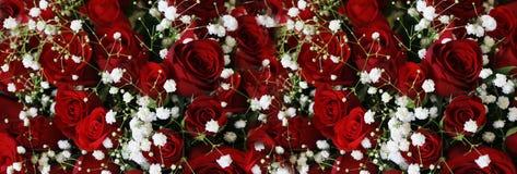 Ruby Roses Background Wallpaper rosso scuro naturale immagine stock libera da diritti