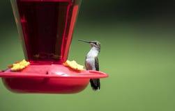 Ruby Throated Hummingbird all'alimentatore dell'uccello del nettare, Clarke County, Georgia U.S.A. fotografia stock libera da diritti