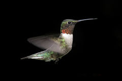 Ruby-throated Hummingbird At A Feeder Royalty Free Stock Image