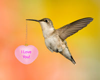 Ruby-Throated Hummingbird Holding A Message Stock Photography