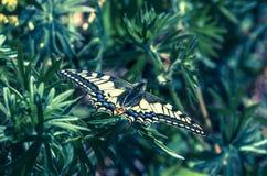 ruby wings Стоковое Изображение