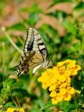 ruby wings Стоковое фото RF