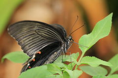 ruby wings Стоковые Изображения