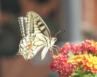 ruby wings Στοκ φωτογραφίες με δικαίωμα ελεύθερης χρήσης