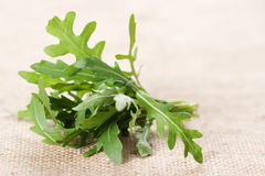 Ruccola Stock Photo