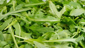 Ruccola leafs Royalty Free Stock Photography