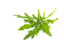 Ruccola raw isolated Royalty Free Stock Images