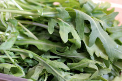 Ruccola Royalty Free Stock Image